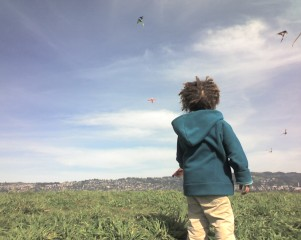Young boy stands gazing in field at kites dancing in the clouds.